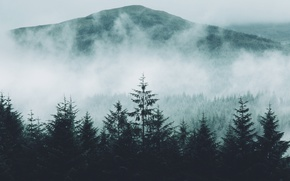 Picture forest, nature, fog, mountain