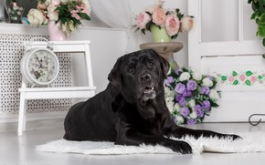 Picture flowers, room, furniture, dog