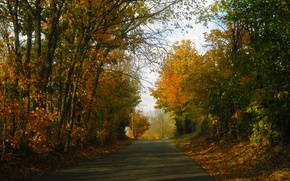 Picture Road, Autumn, Forest, Fall, Autumn, Road, Forest