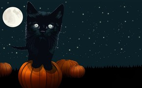 Picture night, holiday, Halloween
