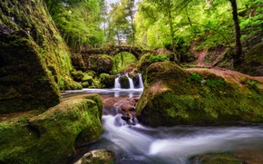Picture forest, trees, bridge, stream, moss