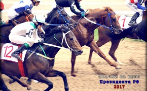 Picture horse, jump, finish, jockey, Racecourse, racing for the prize of the President, MIC