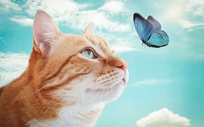 Picture cat, butterfly, red