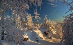 Picture forest, the sky, snow, Winter forest