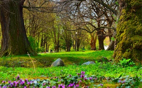 Picture Nature, Spring, Park, Nature, Park, Spring