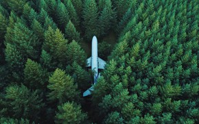 Picture top view, airplane, trees