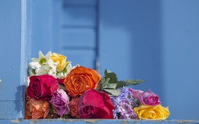 Picture flowers, background, color