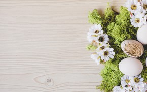 Picture flowers, moss, eggs, spring, Easter, Holiday
