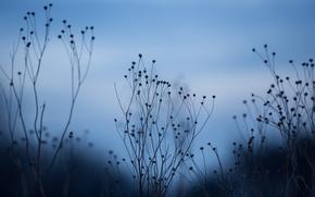 Picture macro, background, dry, rosteniya