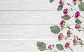 Picture flowers, roses, buds, wood, leaves, roses, small