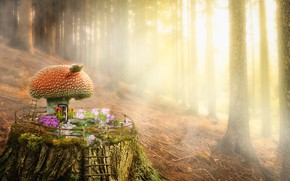 Picture forest, mushroom, stump, house