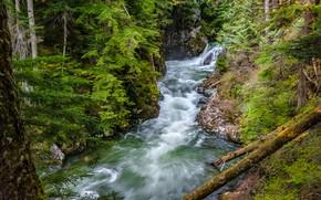 Picture forest, river, Washington, Washington State, Denny Creek