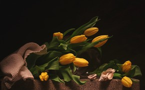 Picture yellow, shell, tulips
