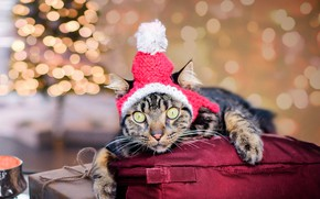 Picture look, holiday, box, tree, image, bag, fashion, knitted, cat, lies, Christmas, cap, little red riding ...