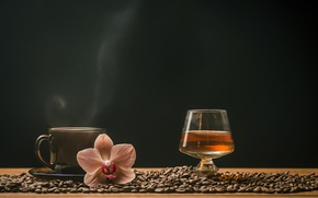 Picture coffee, grain, Cup, drinks, whiskey, Orchid, glass