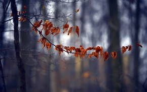 Picture leaves, tree, branch