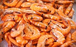 Picture a lot, fresh, shrimp