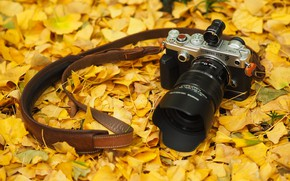 Wallpaper Olympus, the camera, autumn, leaves