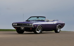 Picture Dodge Challenger, convertible, purple, 1971., muscle classic
