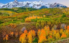 Picture autumn, trees, mountains, slope, Colorado, USA, Aspen