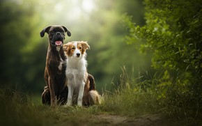 Picture nature, two dogs, Sunny, Tini