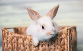 Picture basket, Rabbit, Baby