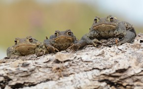 Picture nature, stay, Frogs