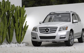 Picture Mercedes-Benz, cactus, yard, GLK