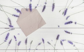 Picture Flowers, lavender, the envelope