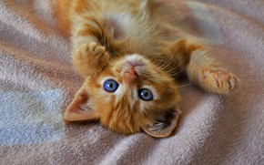 Picture eyes, cat, kitty, legs, blue, red, cute, lies