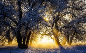 Picture winter, the sun, snow, trees, sunrise, dawn, morning