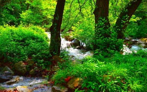Picture Nature, Forest, Summer, Nature, River, Summer, River, Forest
