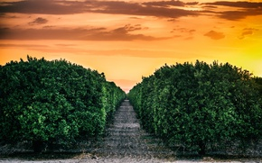 Picture United States, California, central valley sunset, Kern