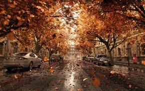Wallpaper leaves, the city, street, cars, Orange Shower