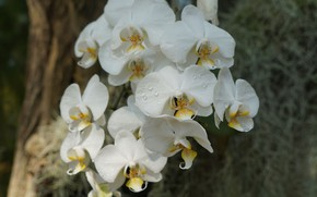 Picture petals, flowering, Orchid, bright
