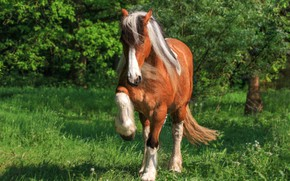 Picture grass, nature, pose, background, horse, horse, hooves, chestnut