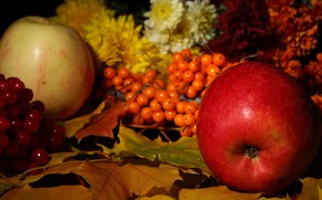 Picture leaves, Apple, Rowan, the gifts of autumn