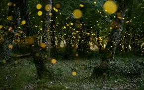Wallpaper forest, nature, fireflies, the evening, bokeh