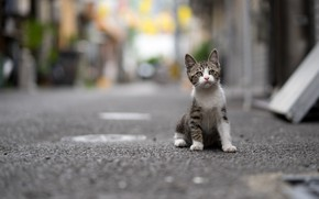 Picture kitty, street, baby