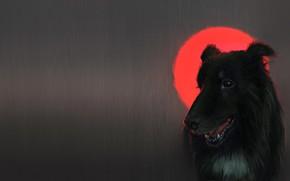 Picture the moon, dog, art, dog, blood moon, katherine dinger