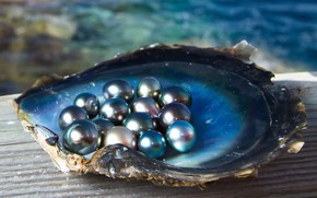 Picture sea, light, Shine, shell, pearls, black pearl