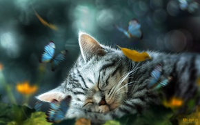 Wallpaper leaves, butterfly, kitty, sleeping, retouching, by Mr-Ripley