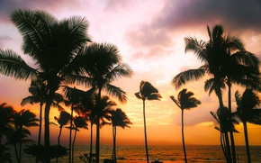 Wallpaper sunset, tropics, horizon, the sky, Hawaii, the evening, sea, palm trees