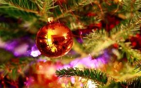 Picture the rain, orange, needles, reflection, mood, green, tree, new year, ball, new year, orange, Xmas, …