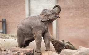 Picture background, elephant, zoo