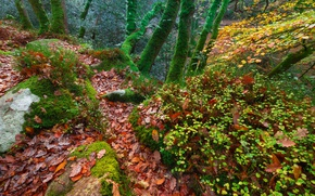 Wallpaper leaves, moss, England, trees, forest, autumn