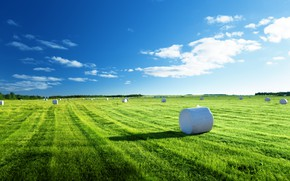 Picture field, nature, hay, weed, blue sky