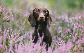Picture nature, each, dog