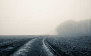 Picture road, field, fog