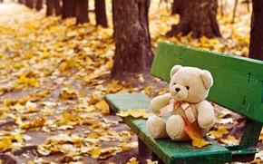 Picture autumn, toy, shop, bear